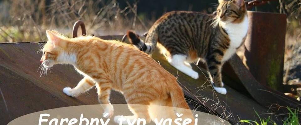Poznáte Farebný Typ Vašej Mačky?
